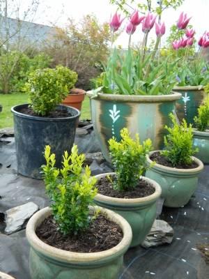 Front : Kilquade box in ceramic pots Back : medium-sized box in larger pots