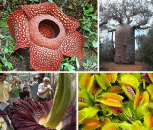 exotic plants (web pic)