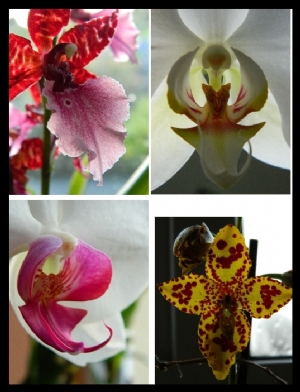 some orchids currently in flower