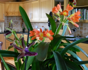 shady house plants
