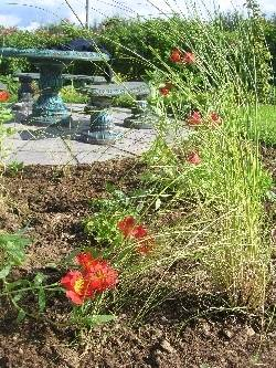 Stipa Capillata & Alstroemeria Oriana