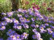 lady in blue & patricia ballard, 11.10.9