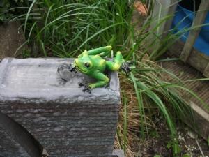 Froggy Heaven