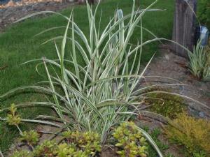 Grass from Terra Nova