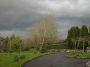 I loved the trees against the dark looming sky