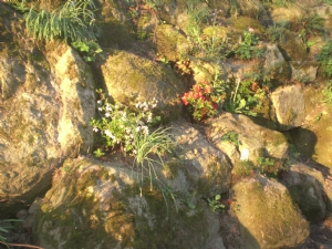 Rockery in evening sunshine