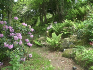 On the way to the Foxgloves