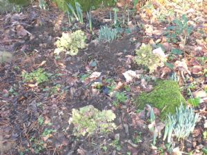 2013 January I think the 'flowers' are heucheras!