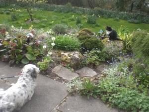 This truce didnt last long! Grandchildrens' dog 'Turf'