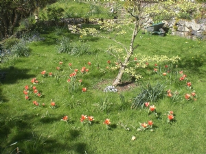 As you see the tulips did arrive at last