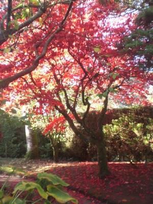 The real thing! Ozakazuki /Japanese gardens