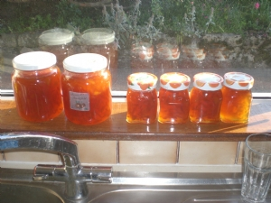 some of Anna's Apricot and Orange Marmalade!