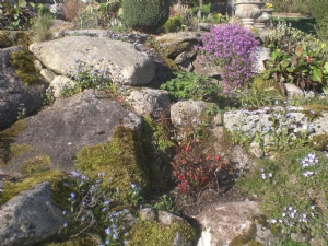 Rockery beginning to colour