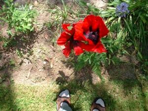 A summery photo/n.b. the socks n' sandals!