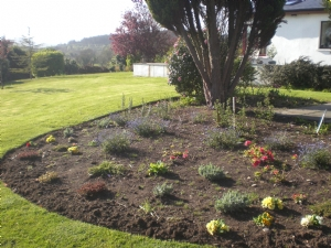 The Wicklow garden-after the rabbits!