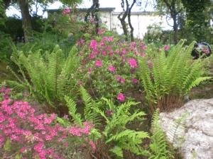 Ferns, rocks, Rhodo's, all one needs really!